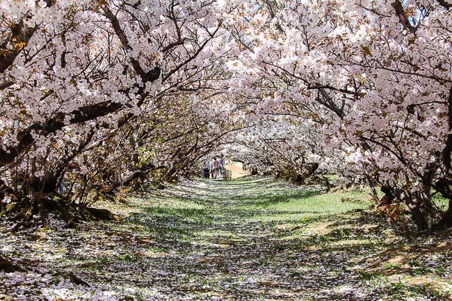 photo courtesy of Kyoto Tourism