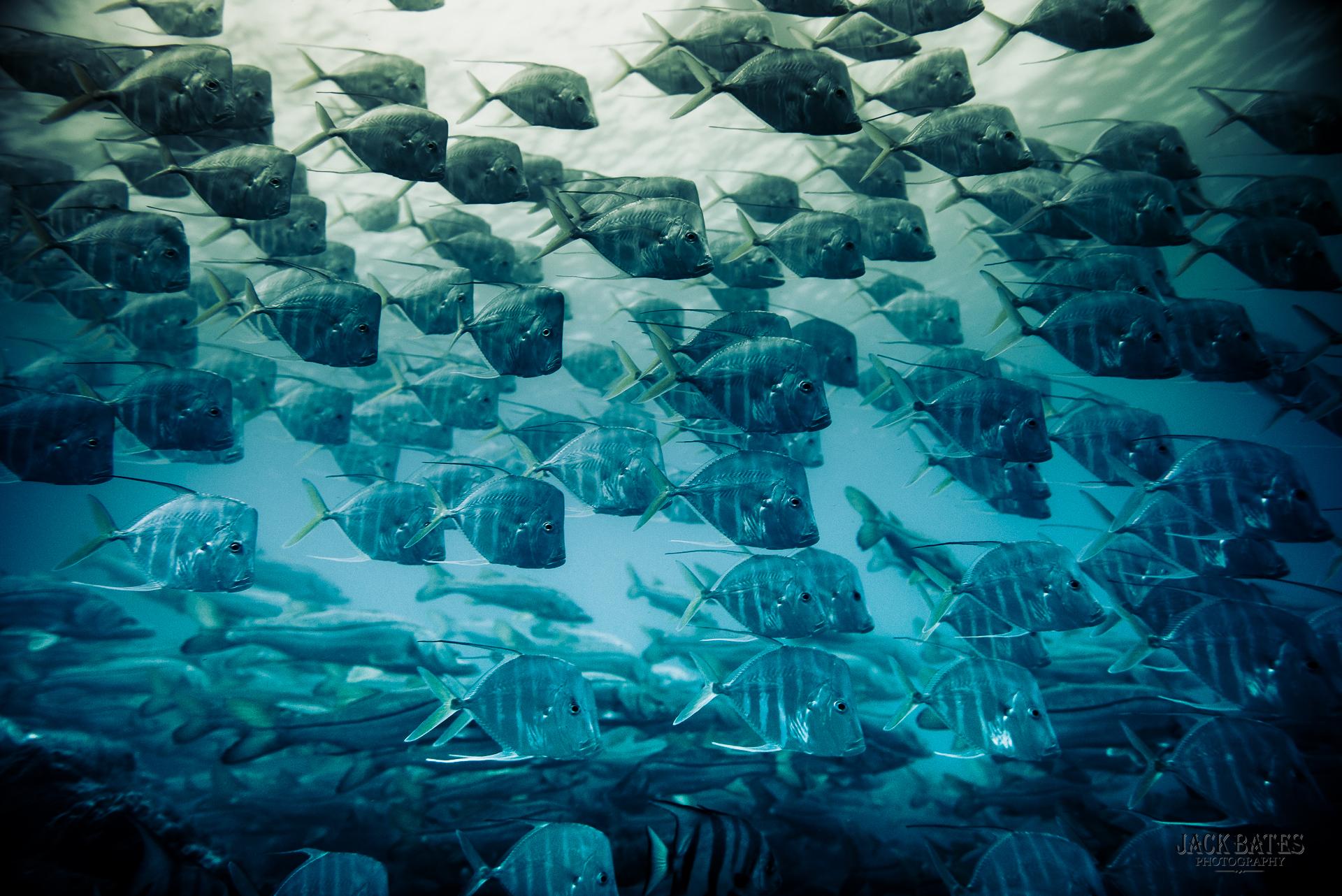 Slack Inlet Dive-32.jpg