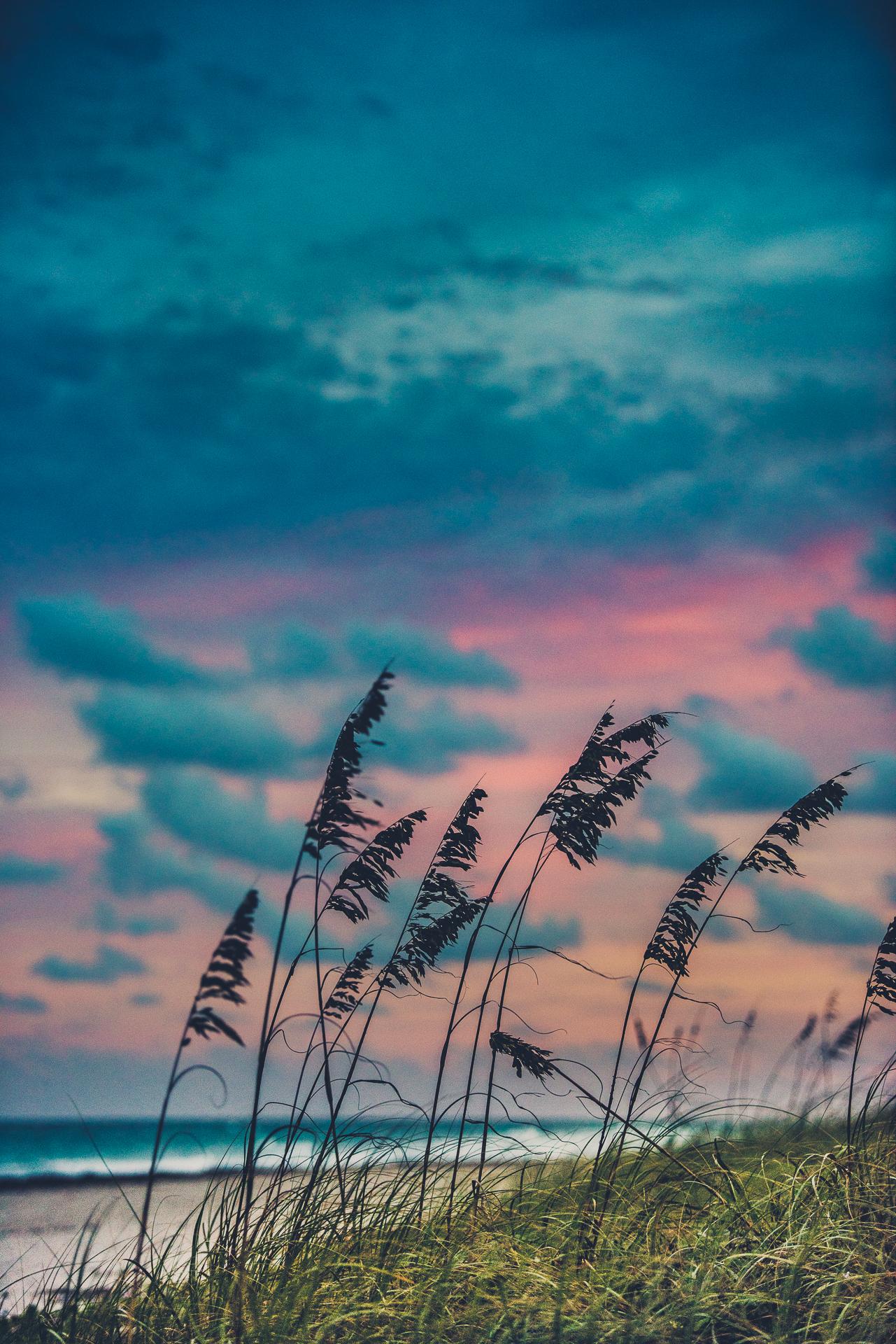 Sunsetwithboo-86.jpg
