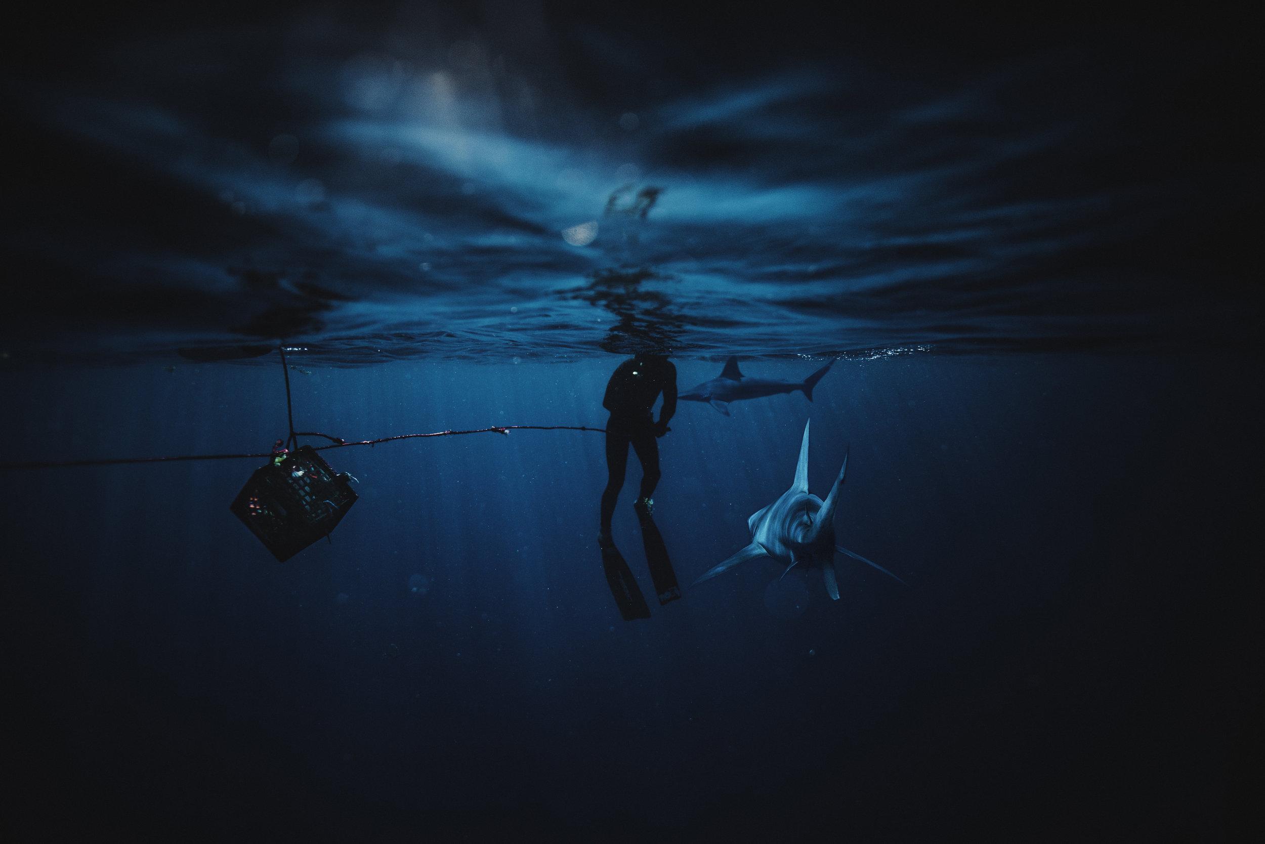 Sharkaddicts composite.jpg