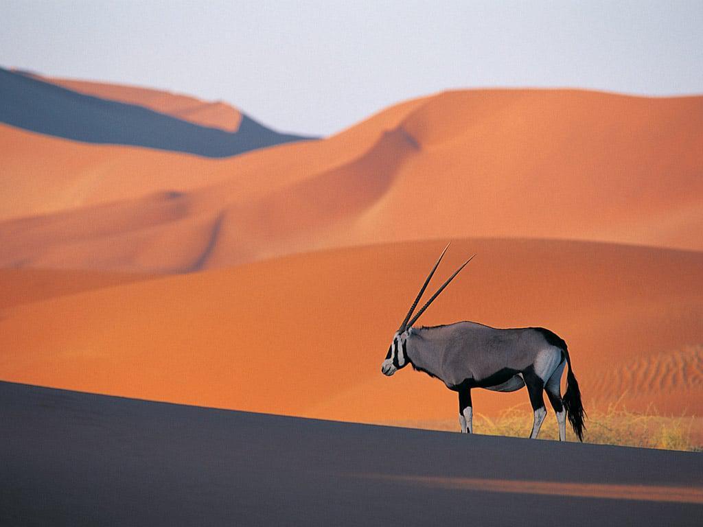 Namibian Desert. Photo Source: southerndestinations.com