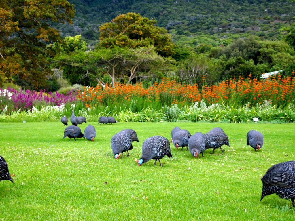 Kirstenbosch National Botanical Garden. Credit: Wallpaper