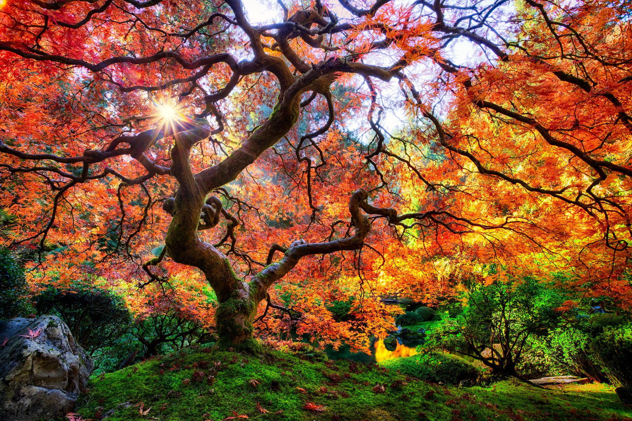 Portland Japanese Garden. Credit: Steemit