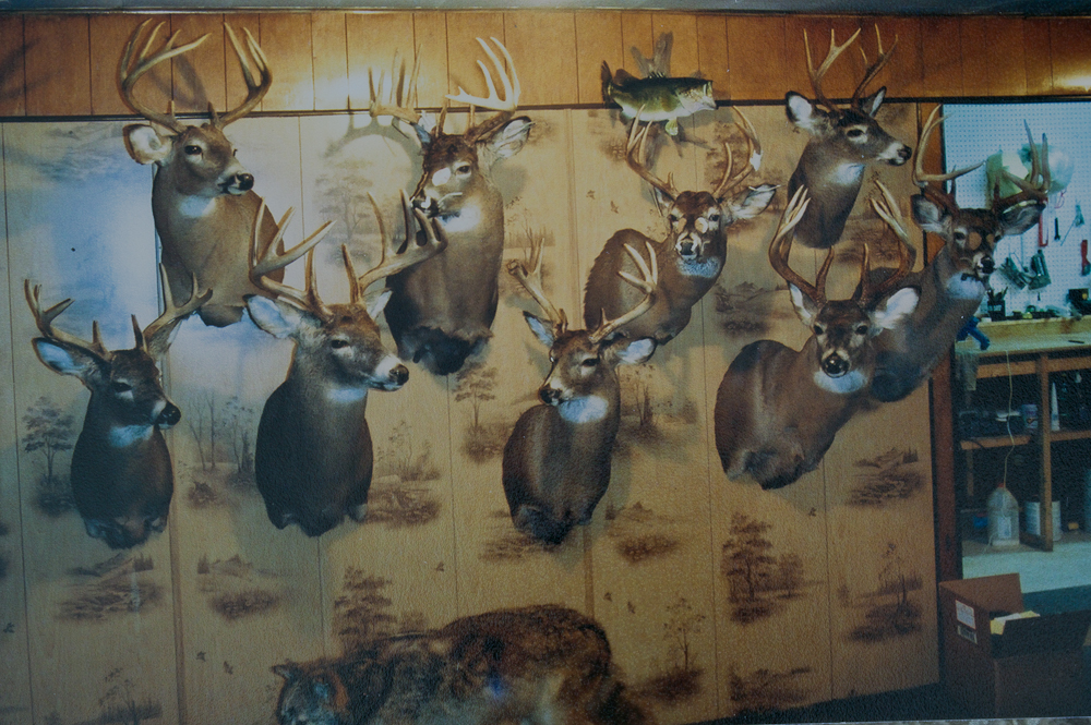 Some deer mounts in the drying stages at Wildlife Creations Studio