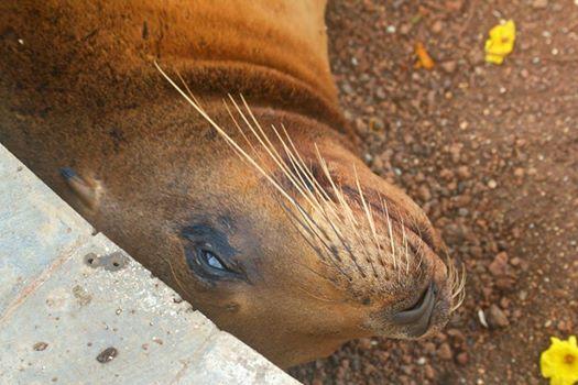 Parque National Galapagos