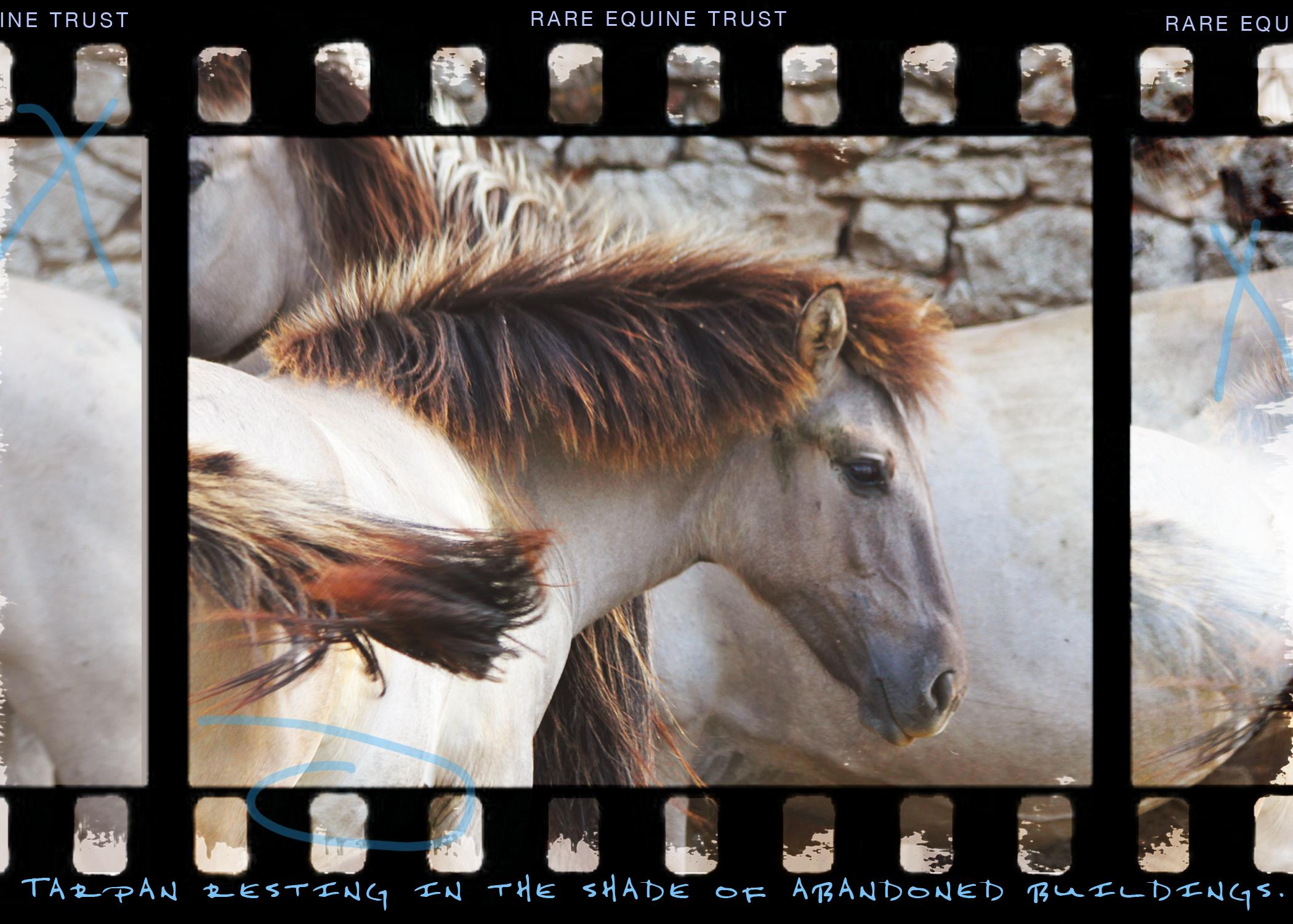 Tarpan web gallery2.jpg