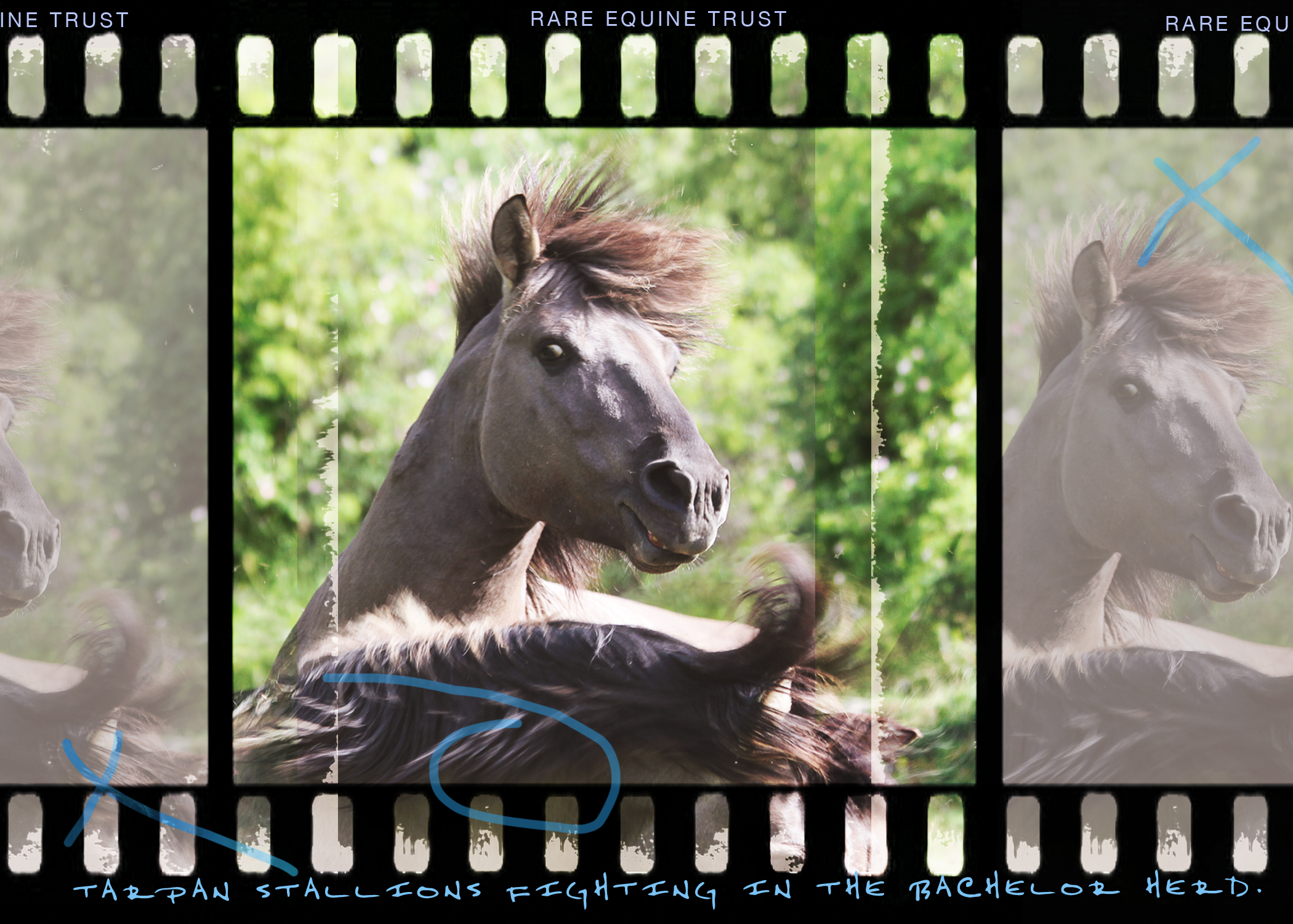 Tarpan web v gallery3.jpg