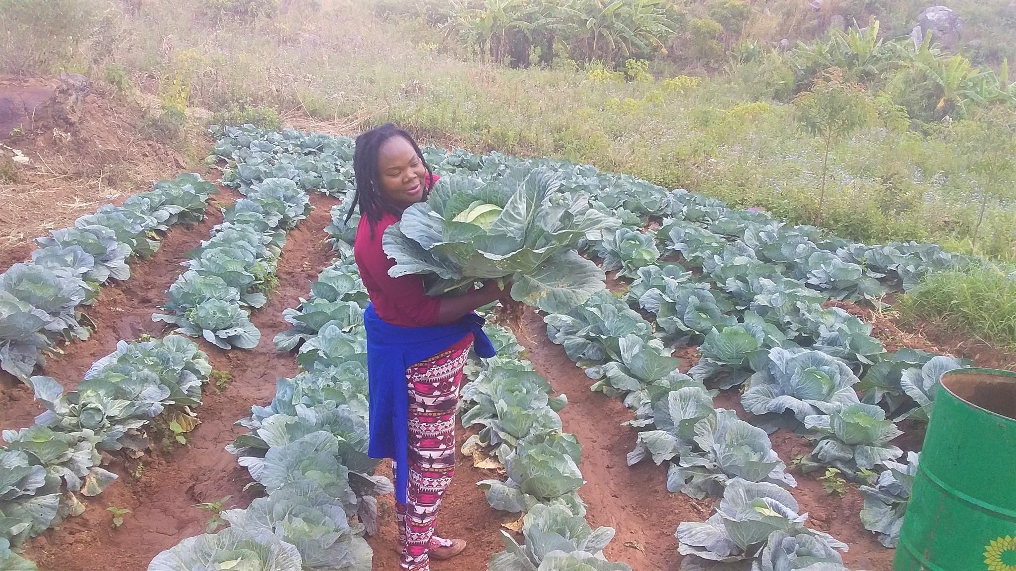 Tac-Maz Investments founder, Thokozani Chimasula, surveying a recent harvest.  Photo courtesy of Tac-Maz Investments.