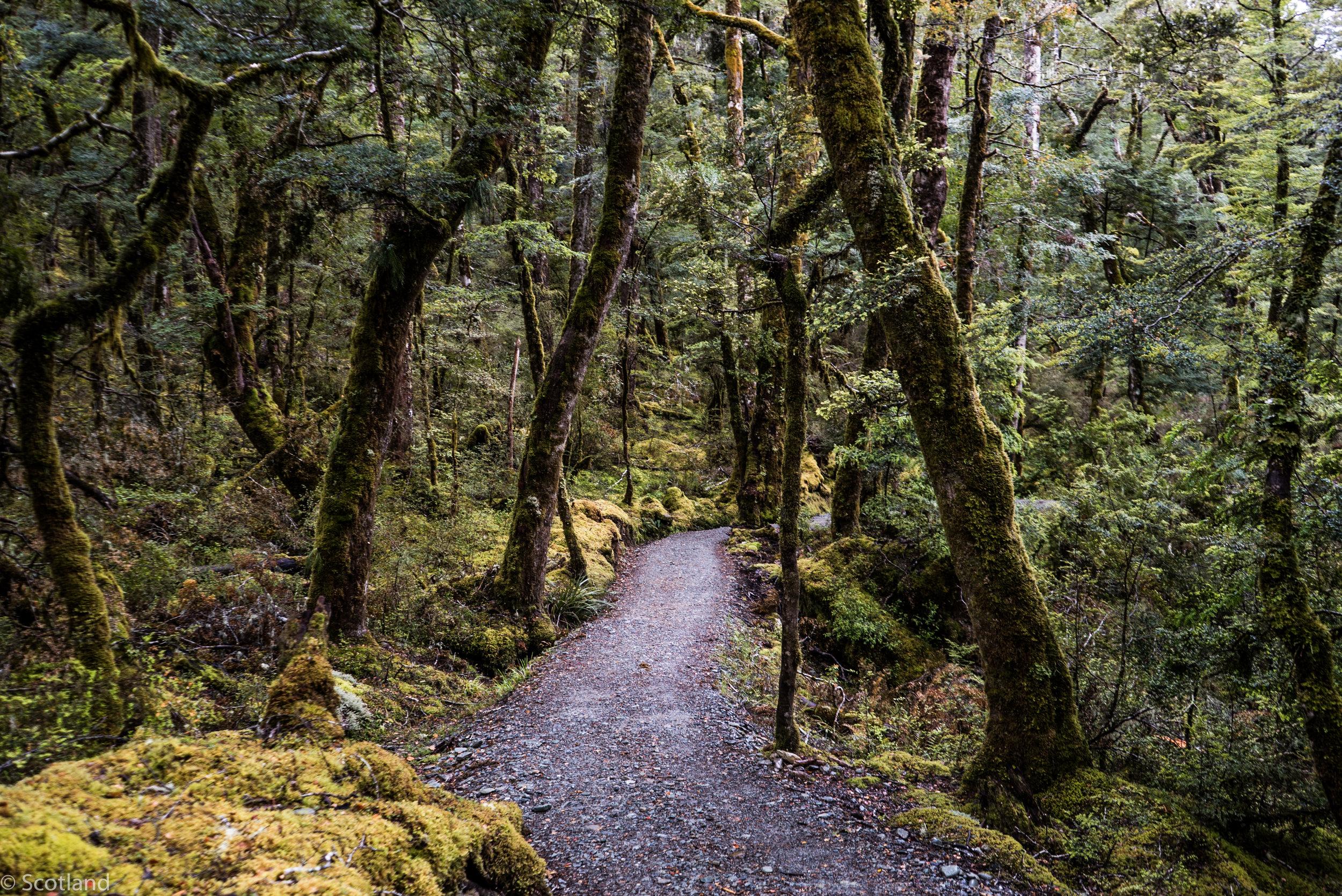 NZ_adventure_2016-36.jpg