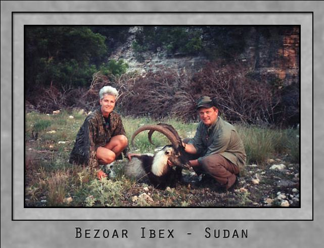 Bezoar Ibex.jpg