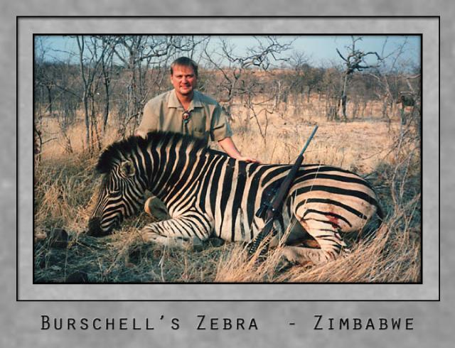 burschells zebra.jpg