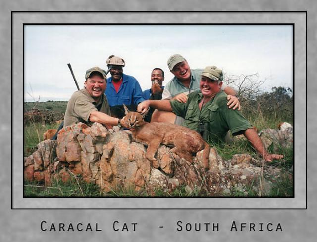 caracal cat.jpg