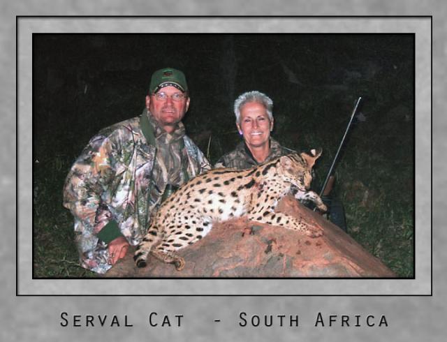 serval cat.jpg