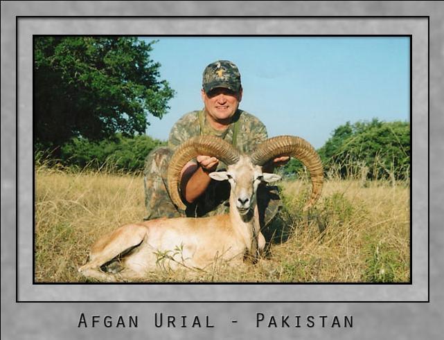 Afgan Urial.jpg