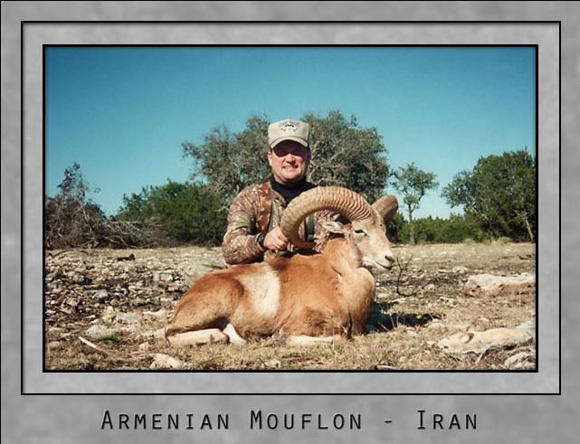 Armenian Mouflon.jpg