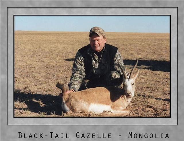 Black tail gazelle.jpg