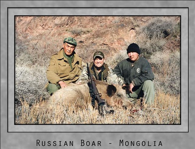 Russian Boar.jpg