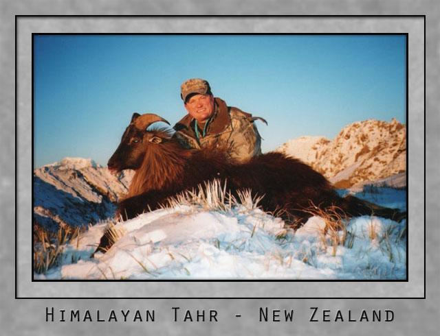Himalayan Tahr.jpg