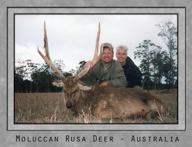Moluccan Rusa Deer.jpg