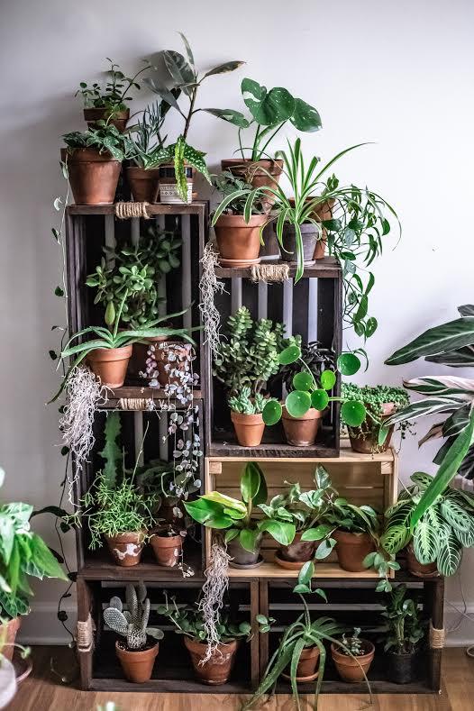 Part of Jennifer's plant world