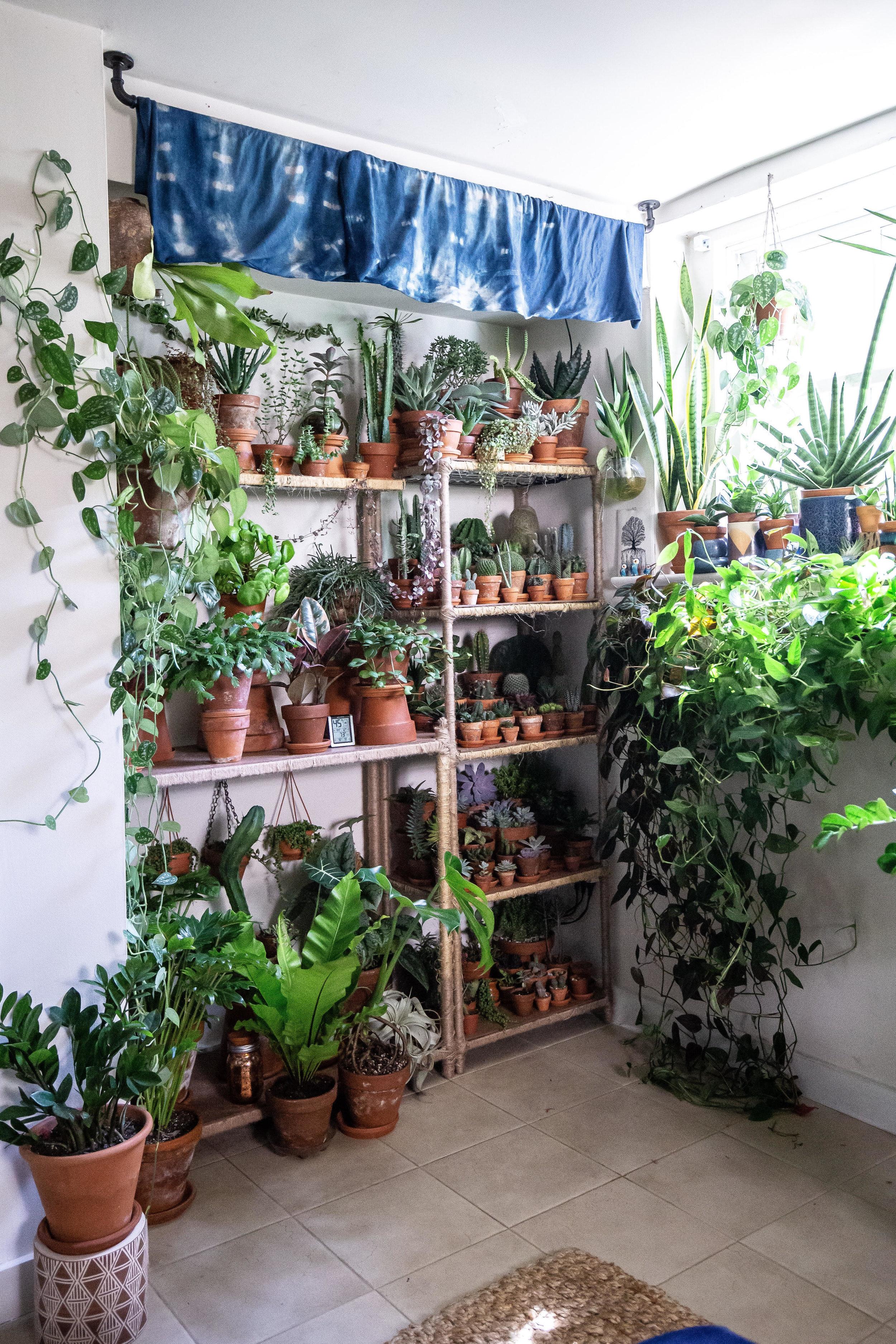 Kevin's plant shelf