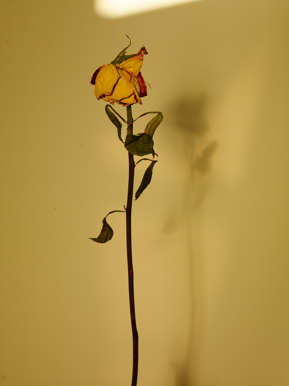 Sun+Flower_015.jpg
