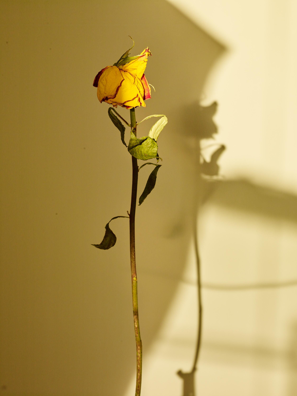 Sun+Flower_038.jpg