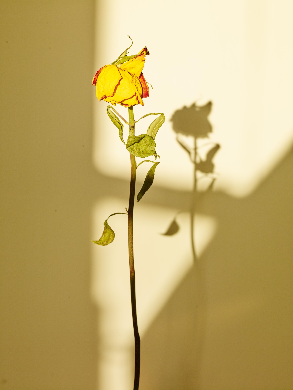 Sun+Flower_016.jpg