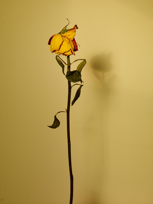 Sun+Flower_039.jpg
