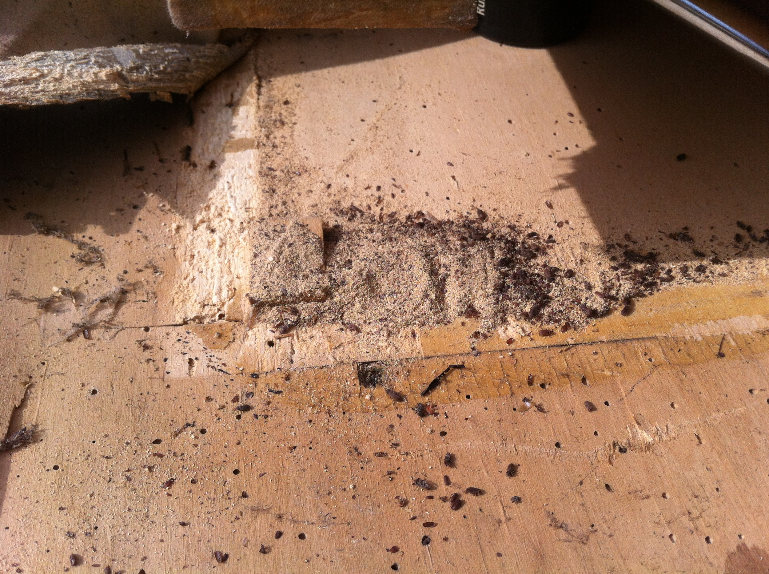 Zoom in and see all the dead woodworm beetles in the bellows!