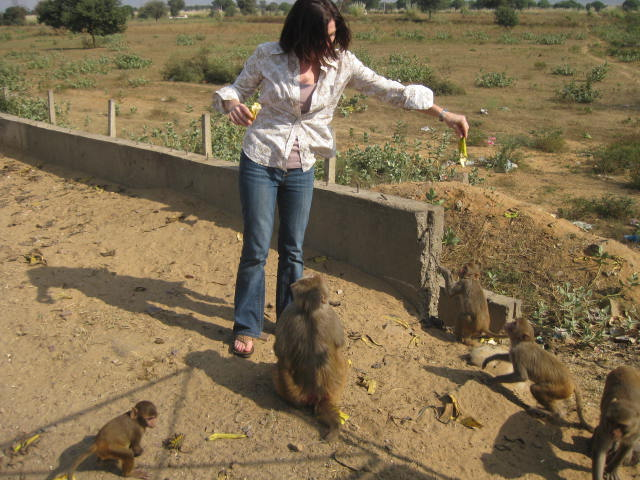 Roadside Monkeys in India