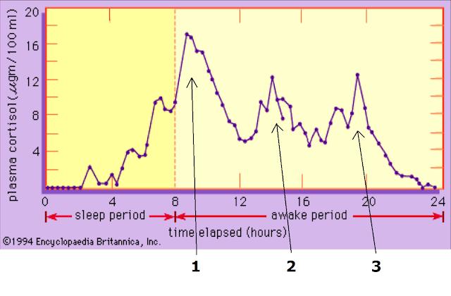 В зависимости от времени утреннего кортизольного пика,  люди делятся на сов и жаворонков. У кого кортизол вырабатывается раньше, раньше и встают. Генетика ¯\_(ツ)_/¯