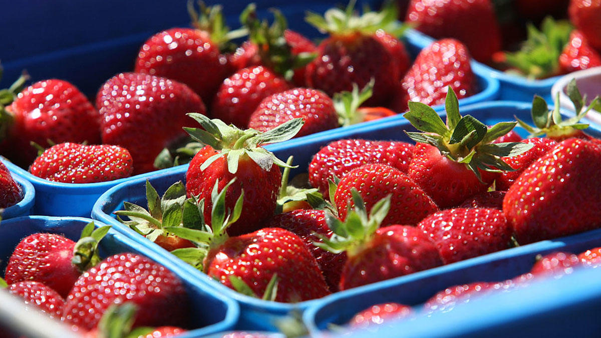 Food and produce packaging supplies and services | GTI Industries Inc