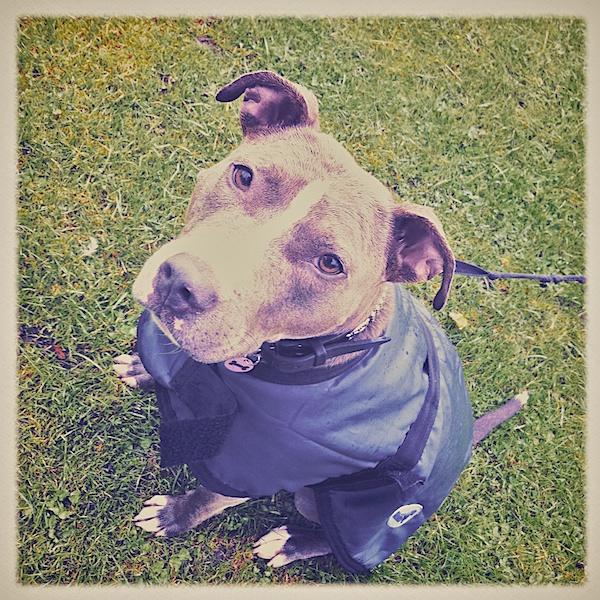 Raindog