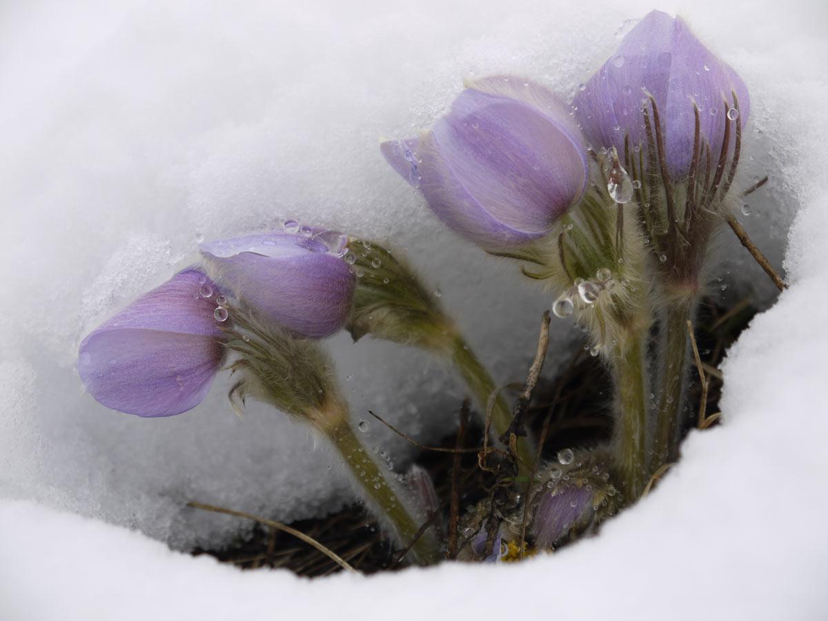 "Dave Baxter, Calgary, Alberta,  ""Spring Hope"""