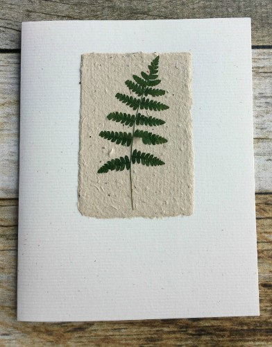 "Pressed fern on 2x3"" green tea paper - note card"