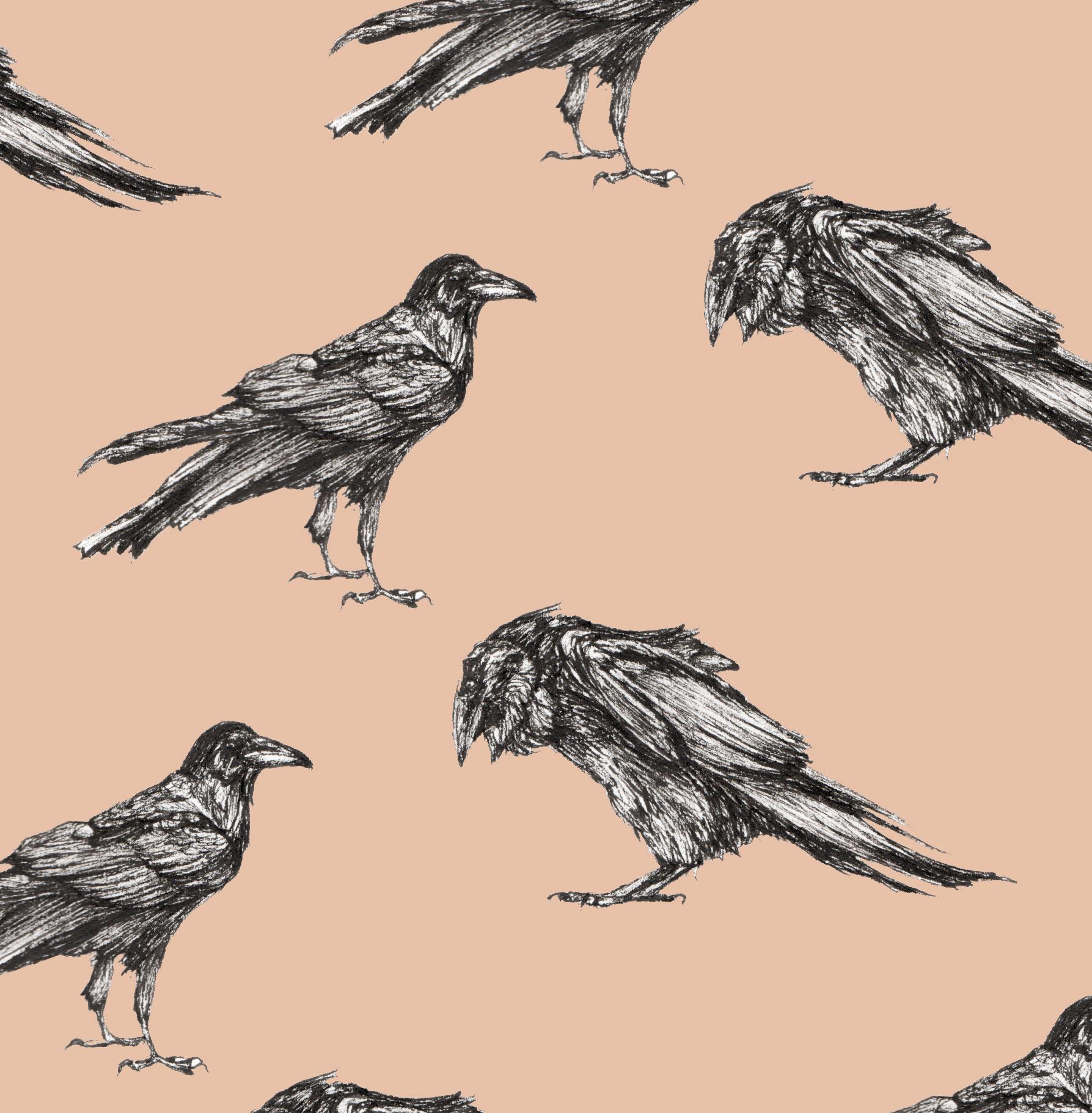 Ravens on Coral