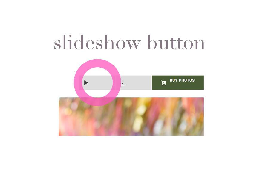 slideshow button.jpg