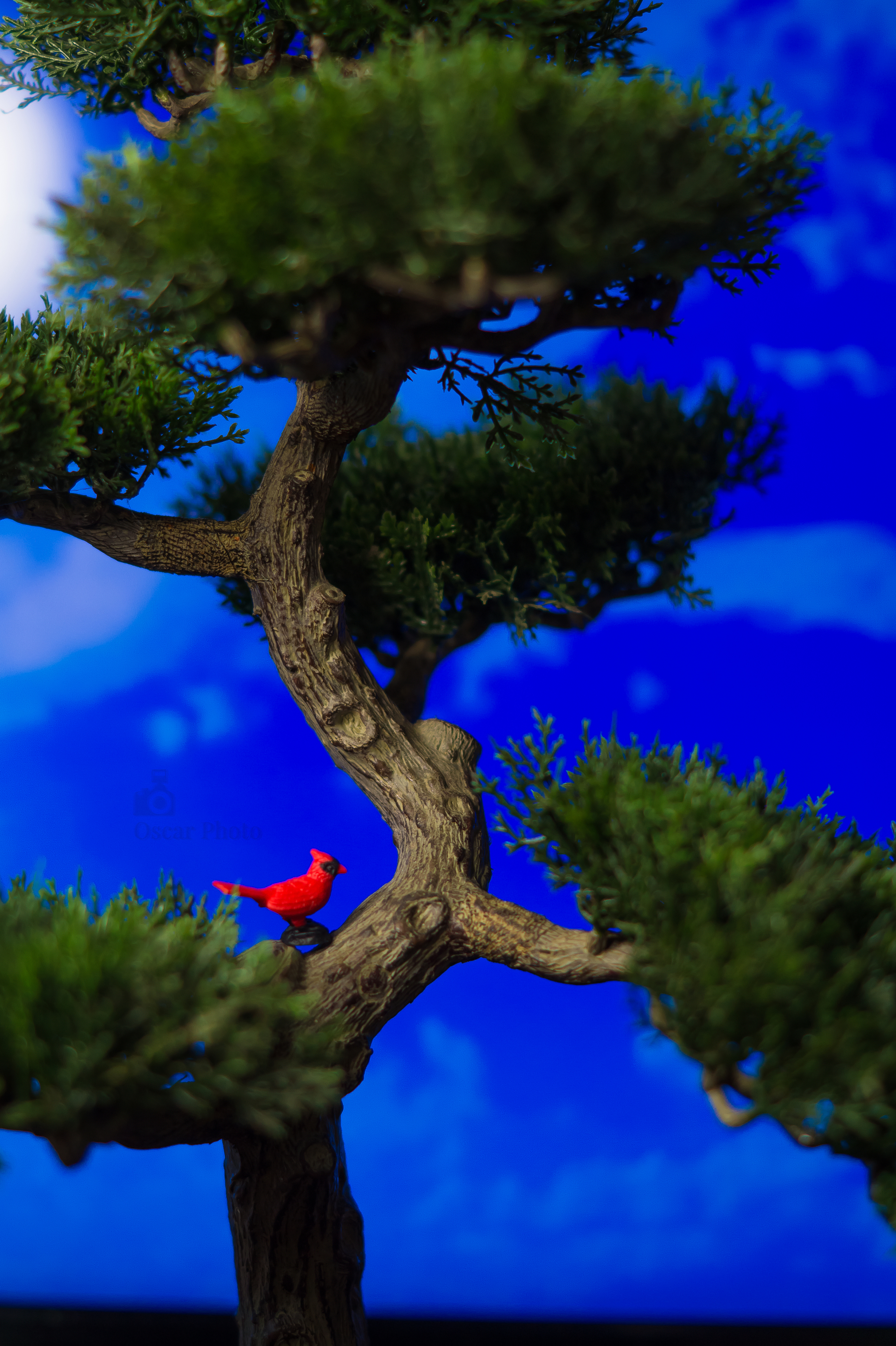 Cardenal on a tree