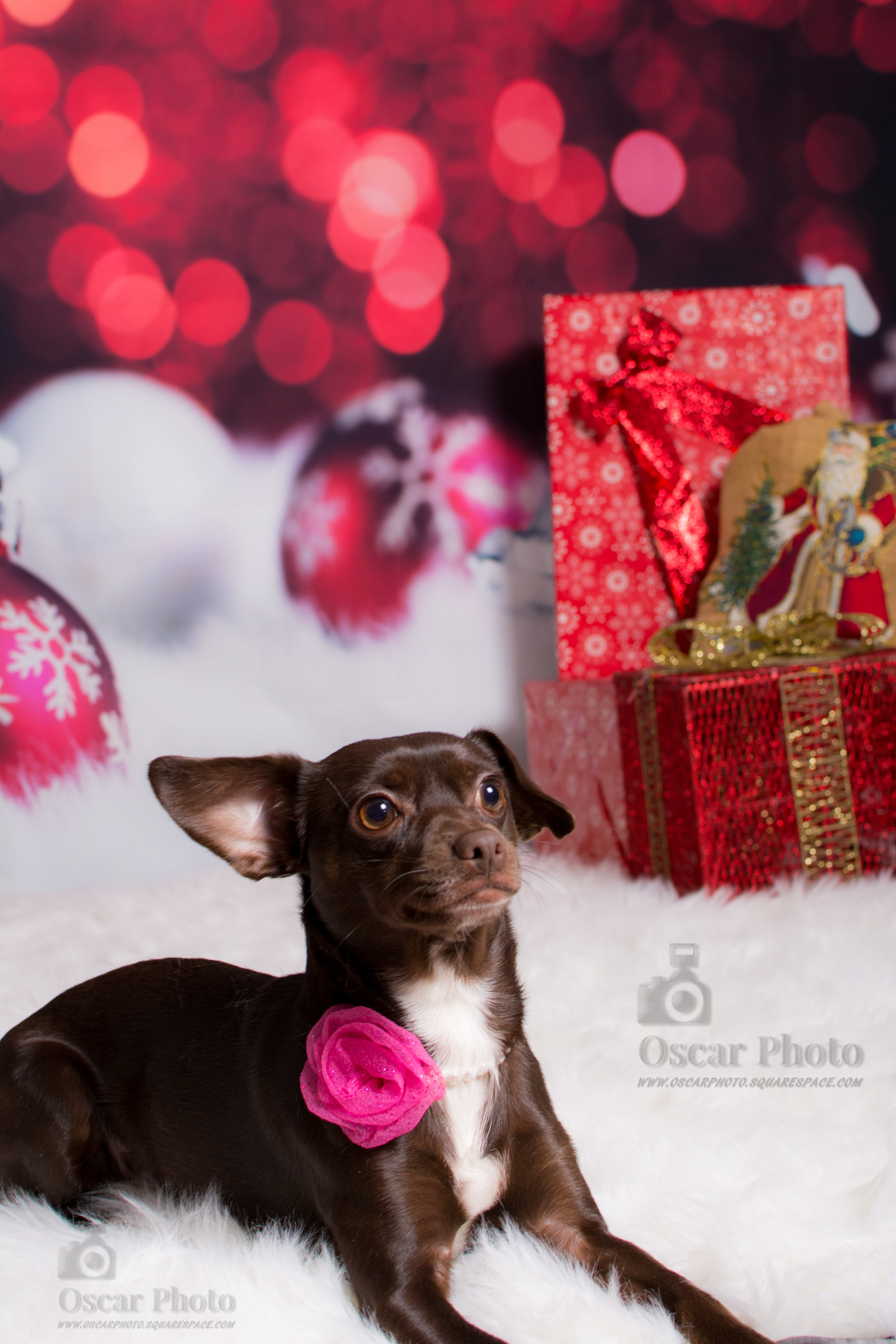 Rasty Christmas Photoshoot