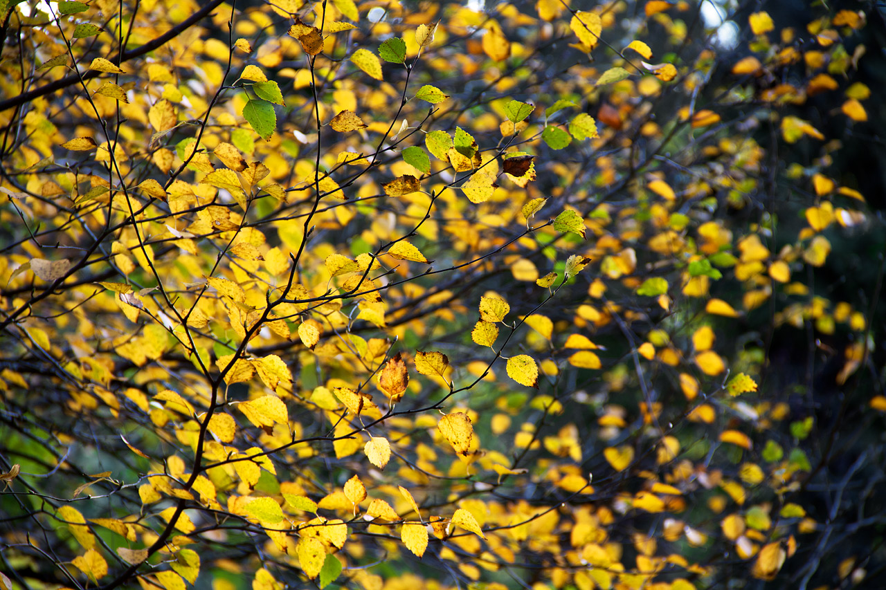 Fall_Color_Abstract.jpg