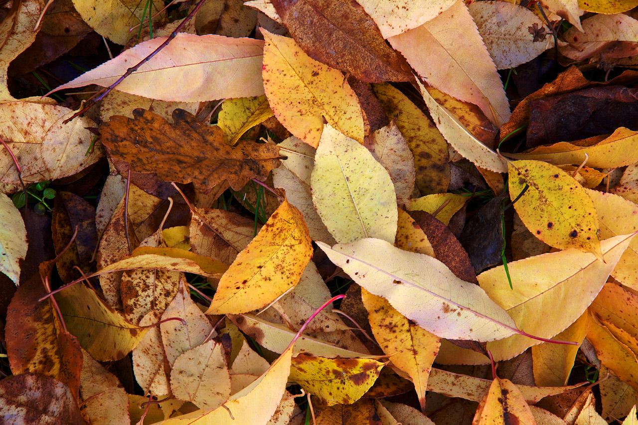 Fall_Color_Detail.jpg