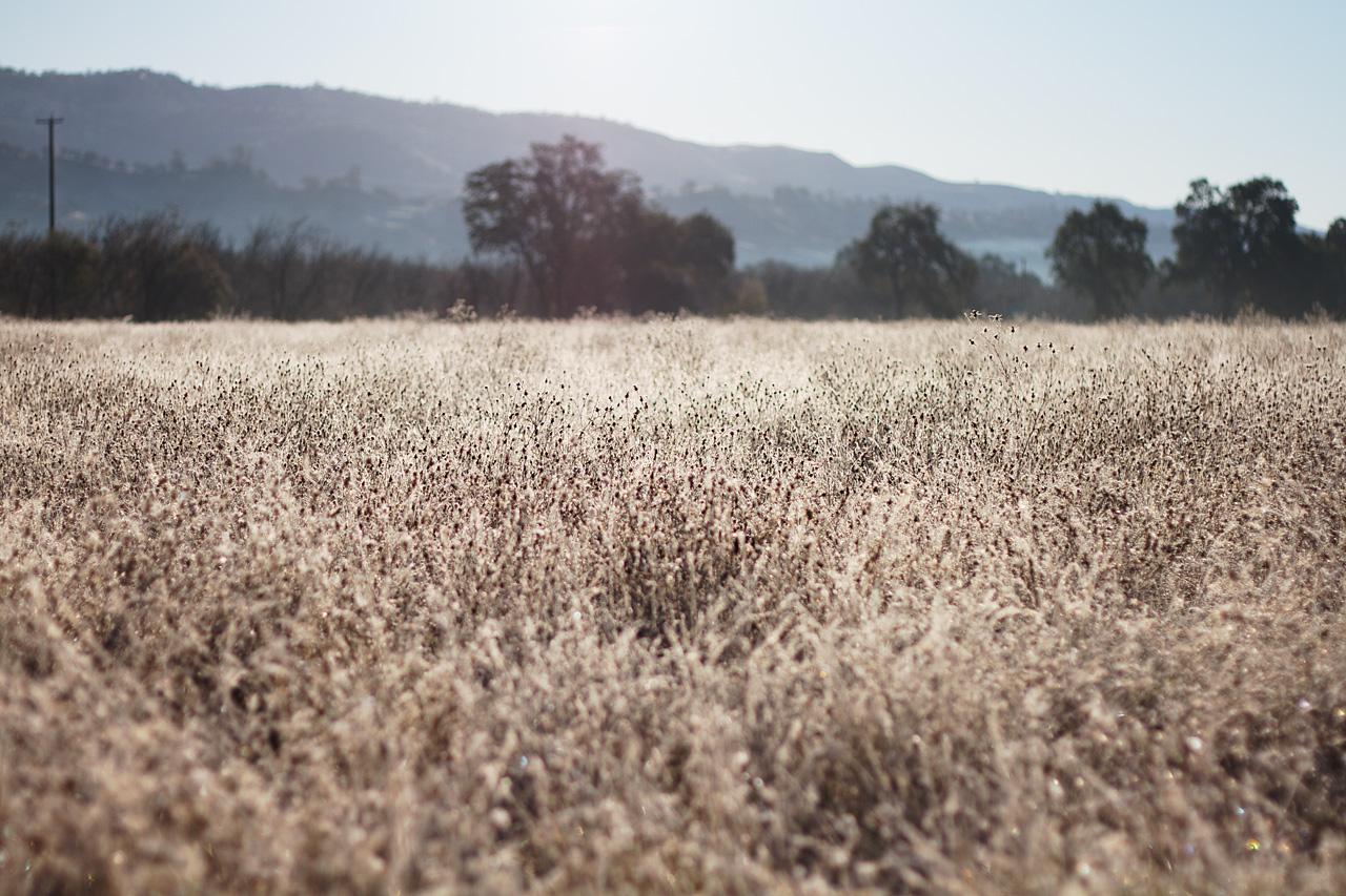 Field_in_Morning_Light.jpg
