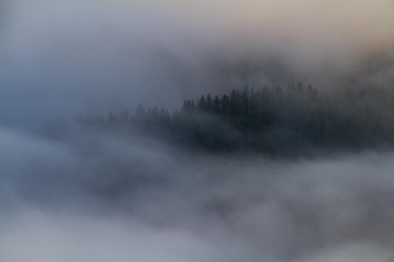 Forest_Ridge_in_Fog.jpg