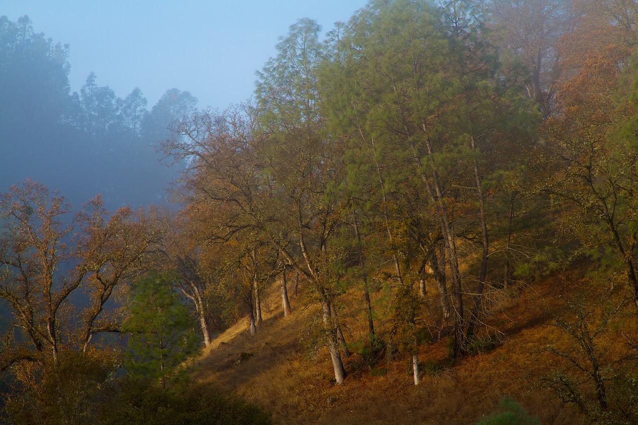 Hillside_in_Fog.jpg