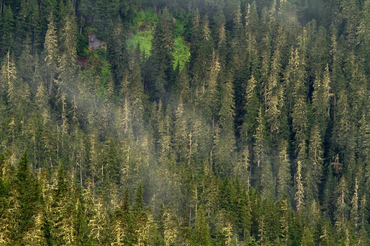 Misty_Slope_on_Mt_Rainier.jpg