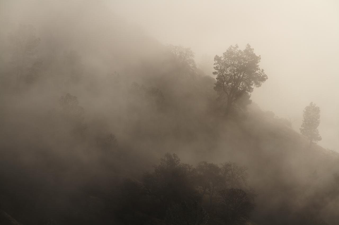 Trees_and_Hillside_in_Fog.jpg