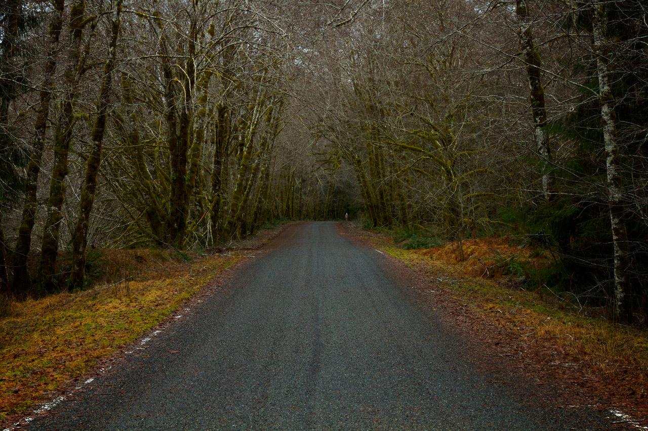 Walk_in_the_Quinalt.jpg