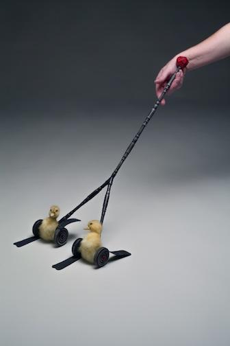 """Duckling Push Toy  Wood, taxidermy, copper  27"""" x 11"""" x 3"""""""