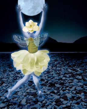 Magnolia Dancer